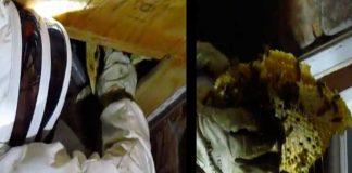 Se encontraron 4000 abejas debajo de su dormitorio