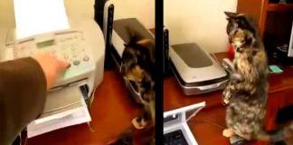 Cuando se enciende la impresora, este gato tiene esta divertida reacción
