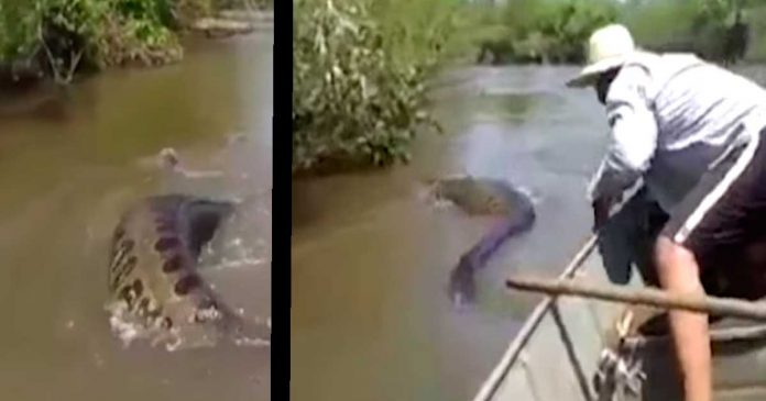 Pescadores despiertan a una impresionante anaconda