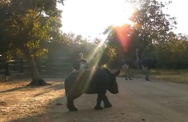 Un bebé Rinoceronte Huérfano fue encontrado Llorando... No hay palabras para el final