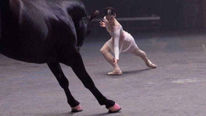 Caballo desafía bailarina