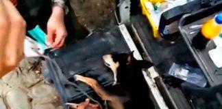 Heroes colombianos salvan perro riada