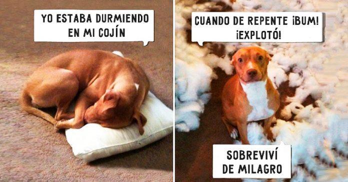 Estos 21 perros no se sienten culpables de sus travesuras