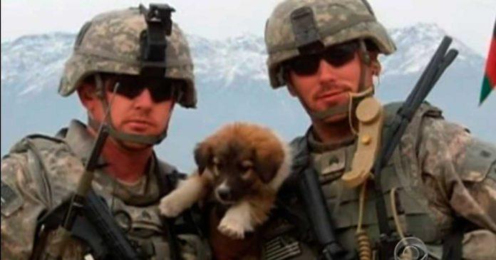 Tres perros callejeros salvaron las vidas de los soldados...