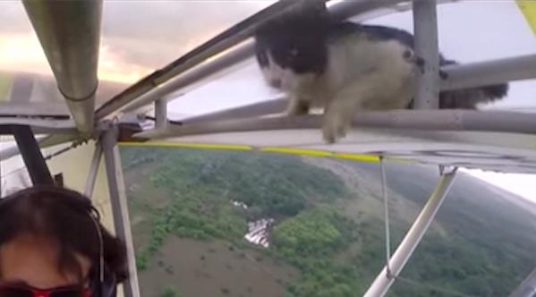 gato avioneta 04