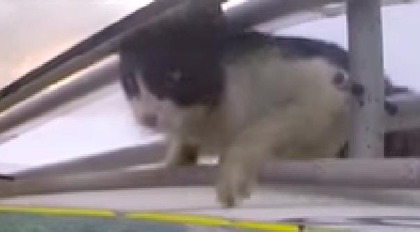 gato avioneta 05