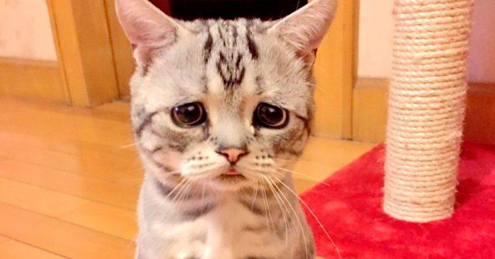 Gato tabby que siempre está triste