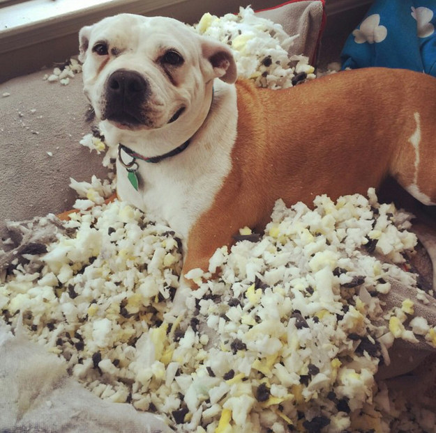 perros culpables travesuras 04