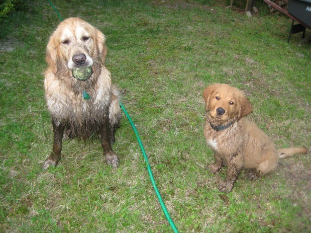 perros culpables travesuras 07