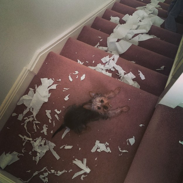 perros culpables travesuras 08