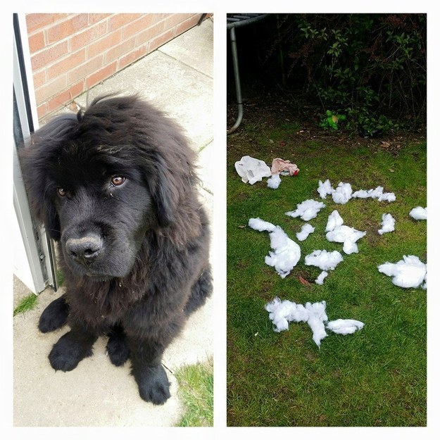 perros culpables travesuras 11