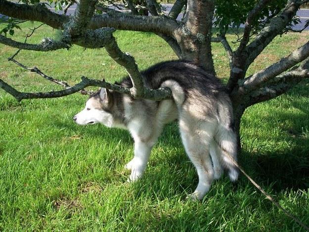 perros culpables travesuras 12