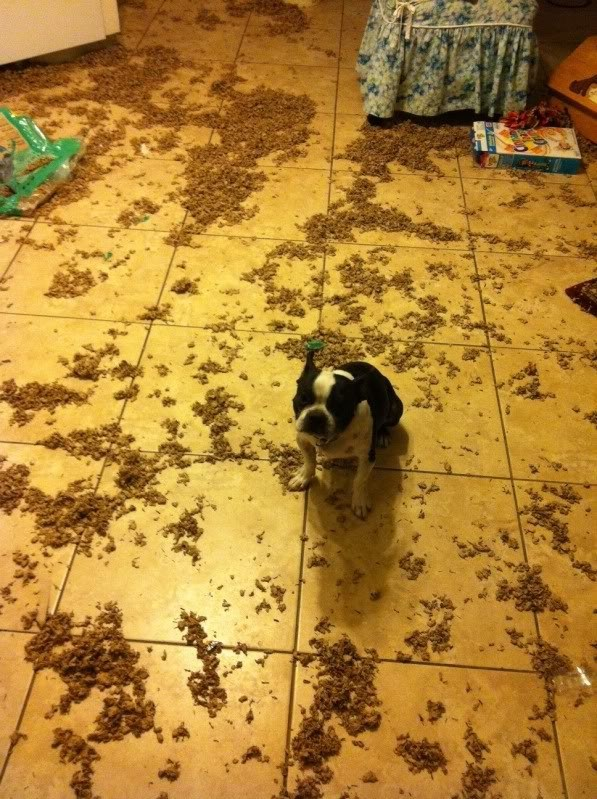 perros culpables travesuras 16