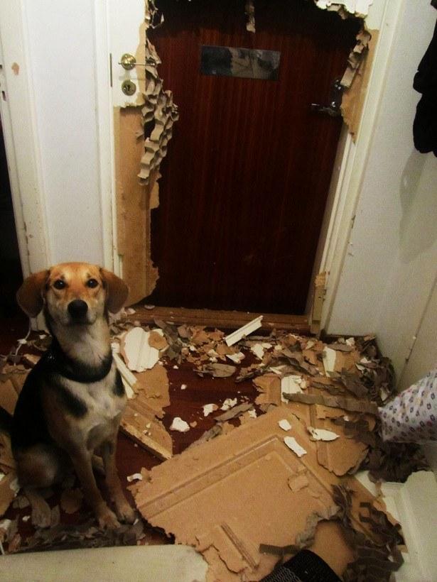 perros culpables travesuras 19