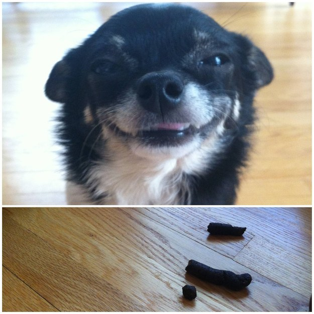 perros culpables travesuras 21