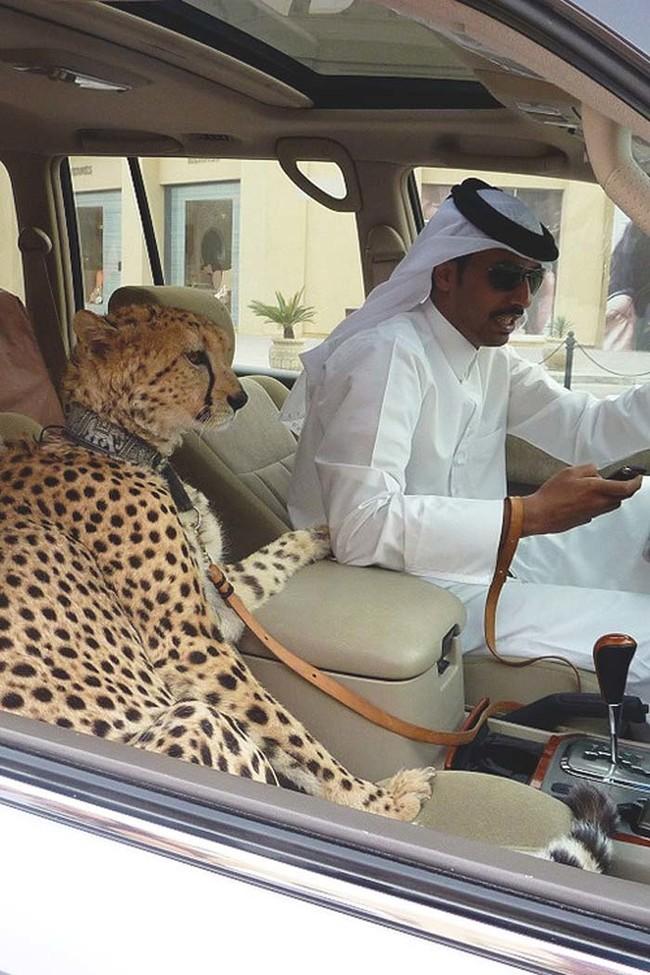 Dubai millonarios ricos extravagantes 01
