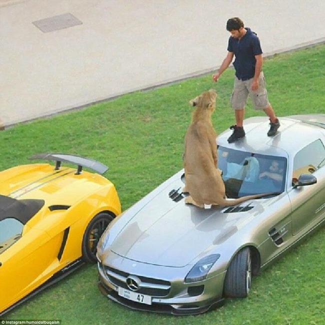 Dubai millonarios ricos extravagantes 05