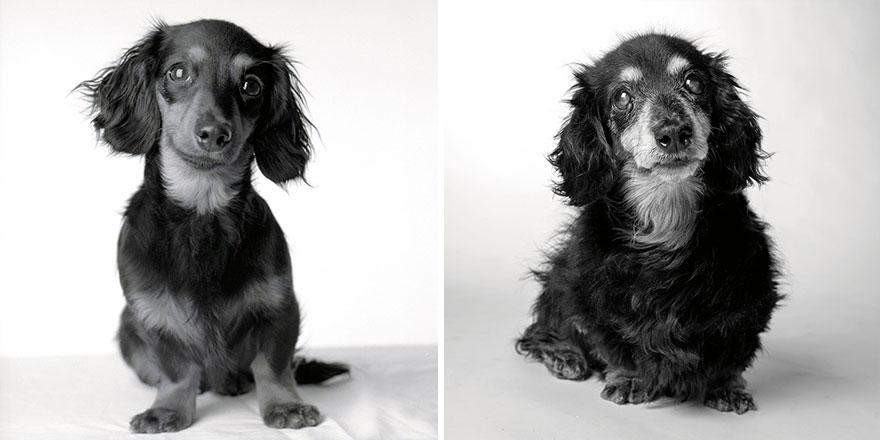 Como envejecen los perros coleccion fotografias 1