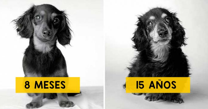 como envejecen los perros banner