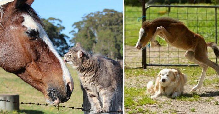Los caballos son los mejores companeros animales que se pueda pedir