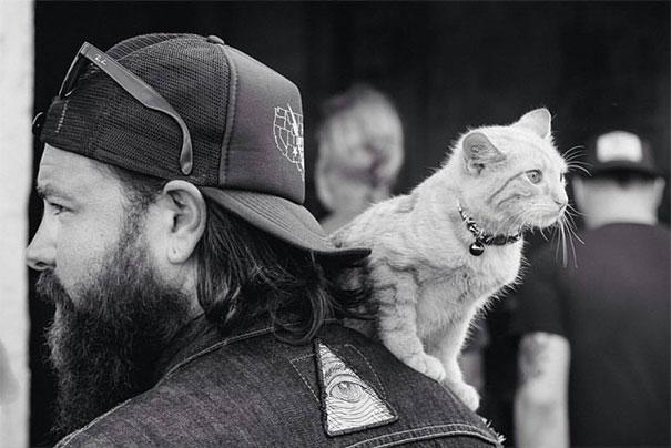Este Héroe Motociclista salvó a un gatito de morir y ahora es su compañero de viaje