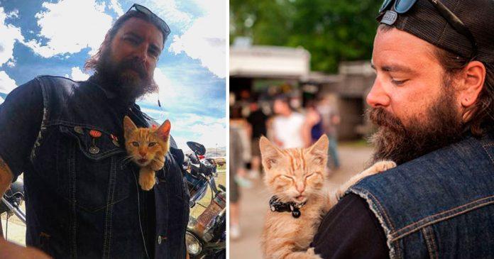 Motociclista salvó a un gatito de morir y ahora es su compañero de viaje