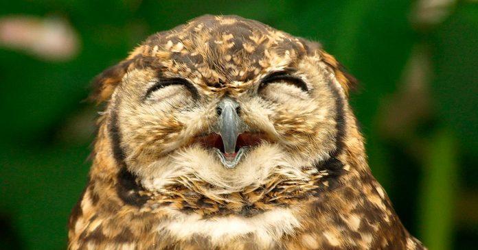Nueva zelanda reconoce que los animales si tienen sentimientos