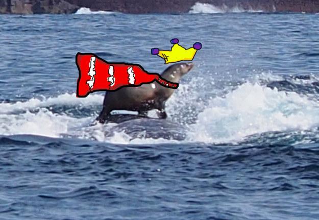 Una mujer fotografia foca montando ballena increible 03