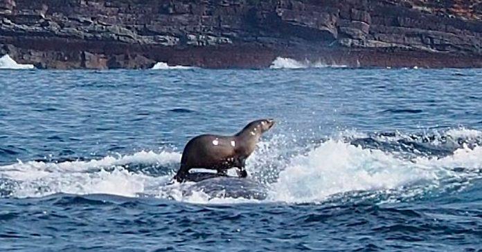 Una mujer fotografia foca montando ballena increible banner