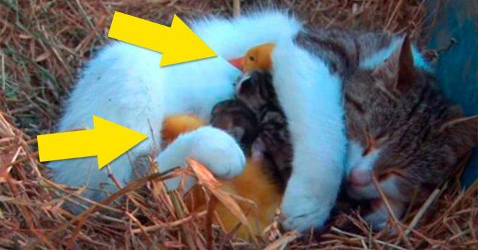 La gata con un enorme corazon que adopto a unos inesperados bebes