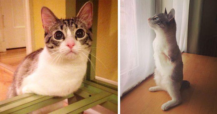 Roux la gata de dos patas adoptada que esta causando sensacion banner
