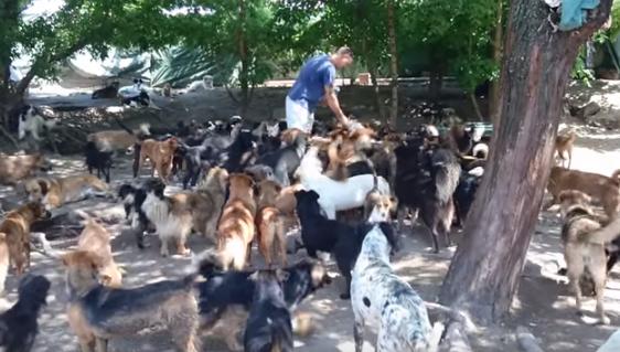 Ha construido este Increíble Santuario para Cientos de Perros abandonados