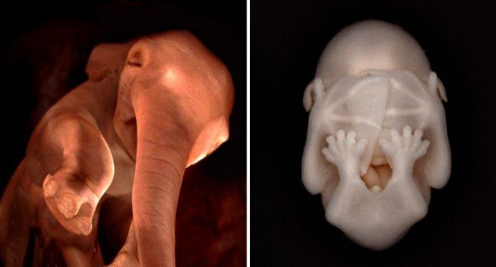 15 increibles fotografias de animales durante el embarazo banner