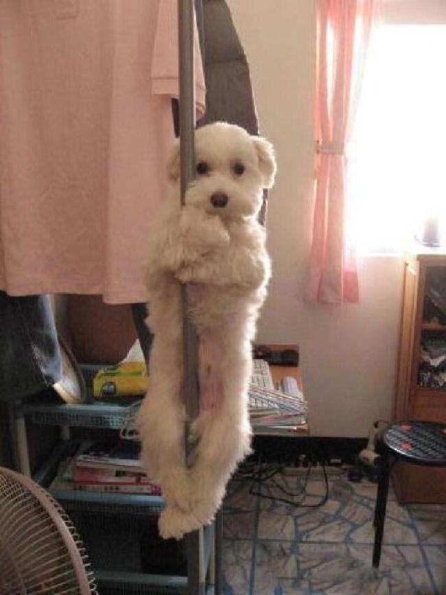 18 Locas mascotas que no esperaban a sus duenos tan pronto 12