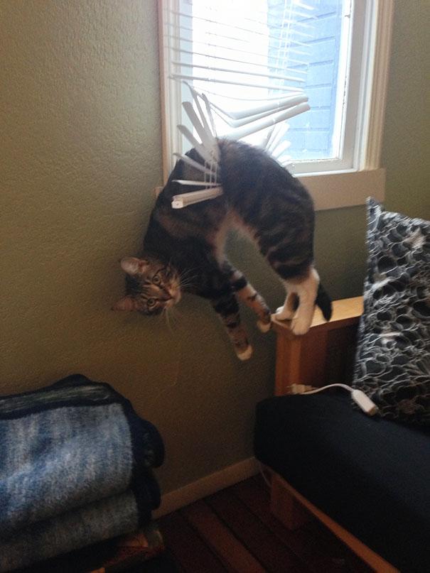 20 Gatos que tomaron la Peor decisión de su Vida... y se arrepintieron al instante