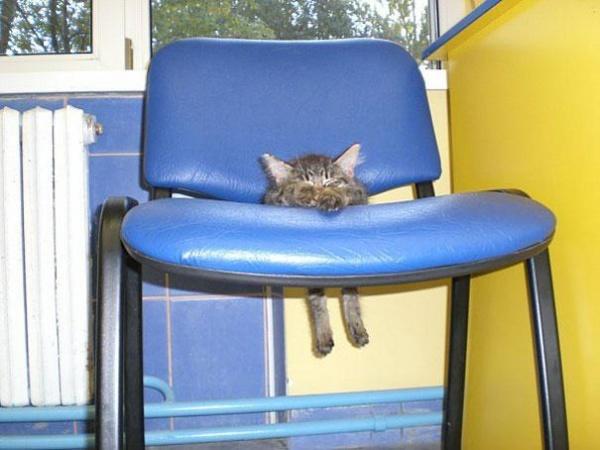 20 Divertidos Perros y Gatos que perdieron la batalla contra nuestros muebles