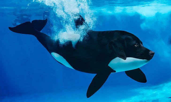 15 Increíbles Criaturas fantásticas nacidas en Photoshop