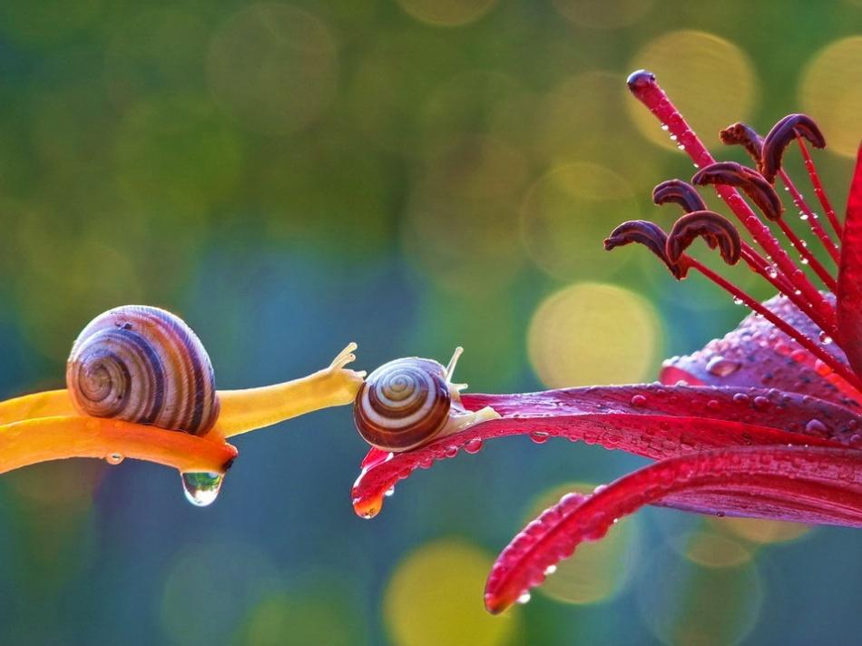 20 Increíbles imágenes que te revelarán el mágico mundo de los Caracoles