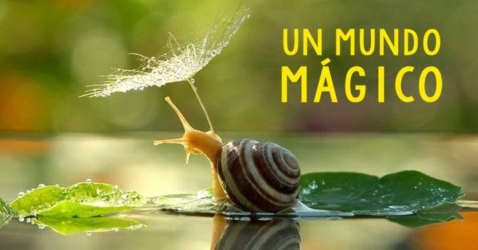 20 imagenes magicas que revelan la autentica belleza de los caracoles BANNER