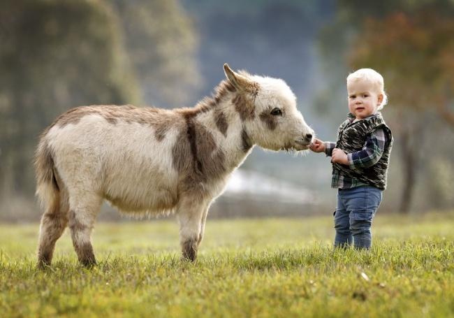 Esta familia tiene burros enanos en lugar de perros 03