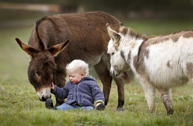 Esta familia tiene burros enanos en lugar de perros 04
