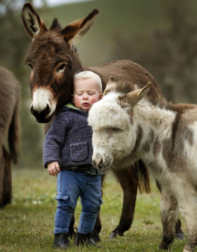 Esta familia tiene burros enanos en lugar de perros 05