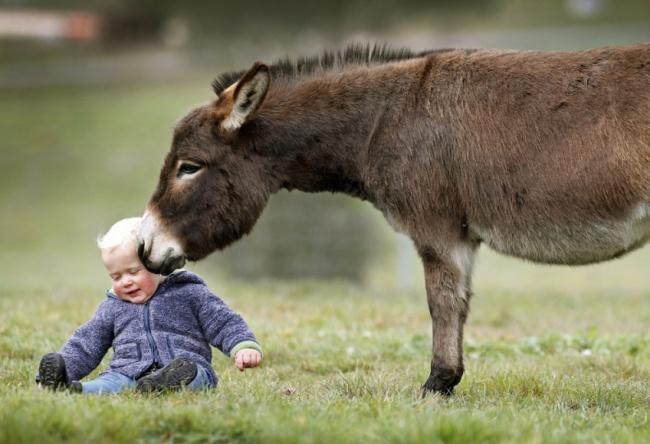 Esta familia tiene burros enanos en lugar de perros 06