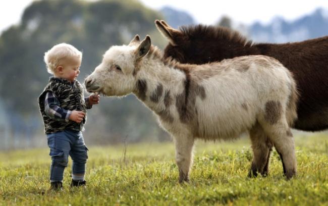 Esta familia tiene burros enanos en lugar de perros 07
