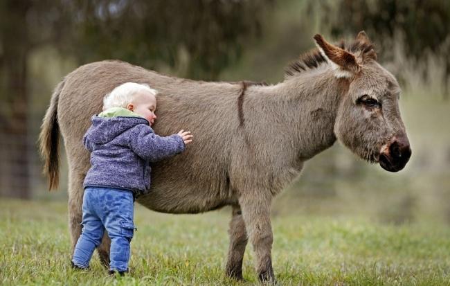 Esta familia tiene burros enanos en lugar de perros 08