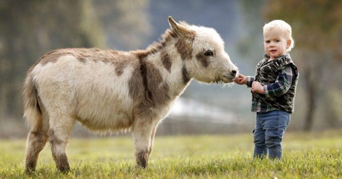 Esta familia tiene burros enanos en lugar de perros