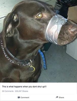 Amordaza a su Perro con cinta aislante y lo publica en Facebook