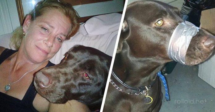 Esta mujer amordaza a su perro y lo publica en facebook banner