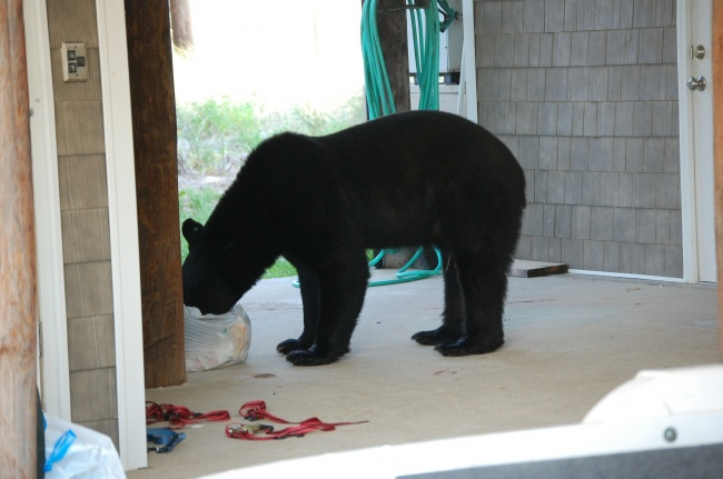 Este increible hombre arriesgo su propia vida para salvar a un enorme oso 01