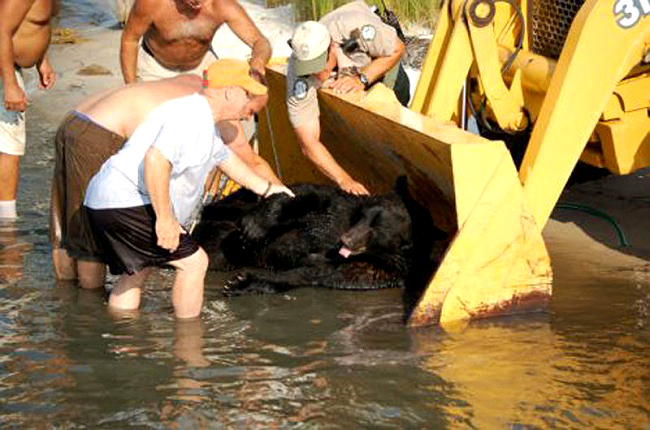Este increible hombre arriesgo su propia vida para salvar a un enorme oso 13